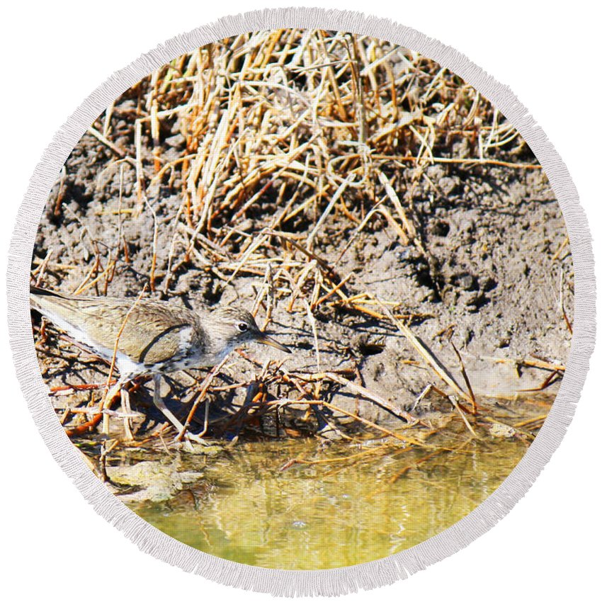Actitis Macularia Round Beach Towel featuring the photograph Spotted Sandpiper At The Canal by Roena King