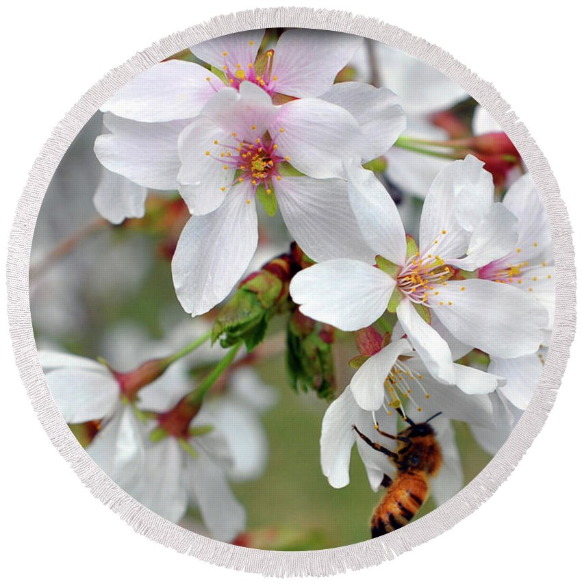 Spring Round Beach Towel featuring the photograph Springtime Weeping Cherry Tree by Brittany Horton