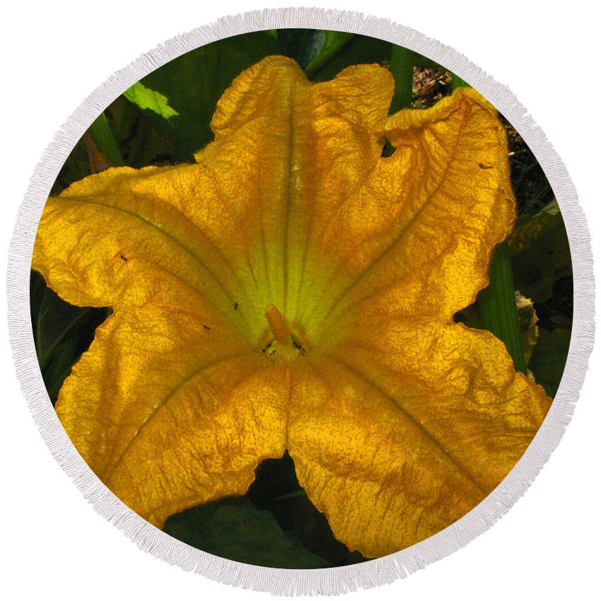 Bloom Round Beach Towel featuring the photograph Squash Blossom 09 19 11 by Joyce Dickens