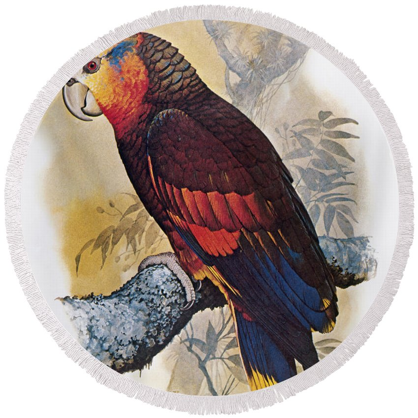 Amazon Round Beach Towel featuring the photograph St Vincent Amazon Parrot by Granger