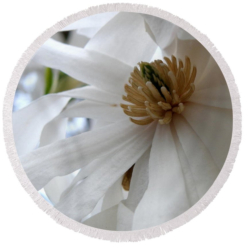 Magnolia Round Beach Towel featuring the photograph Star Magnolia by Lainie Wrightson