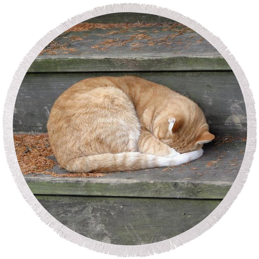 Cat Round Beach Towel featuring the photograph Step Sleeper by Living Color Photography Lorraine Lynch
