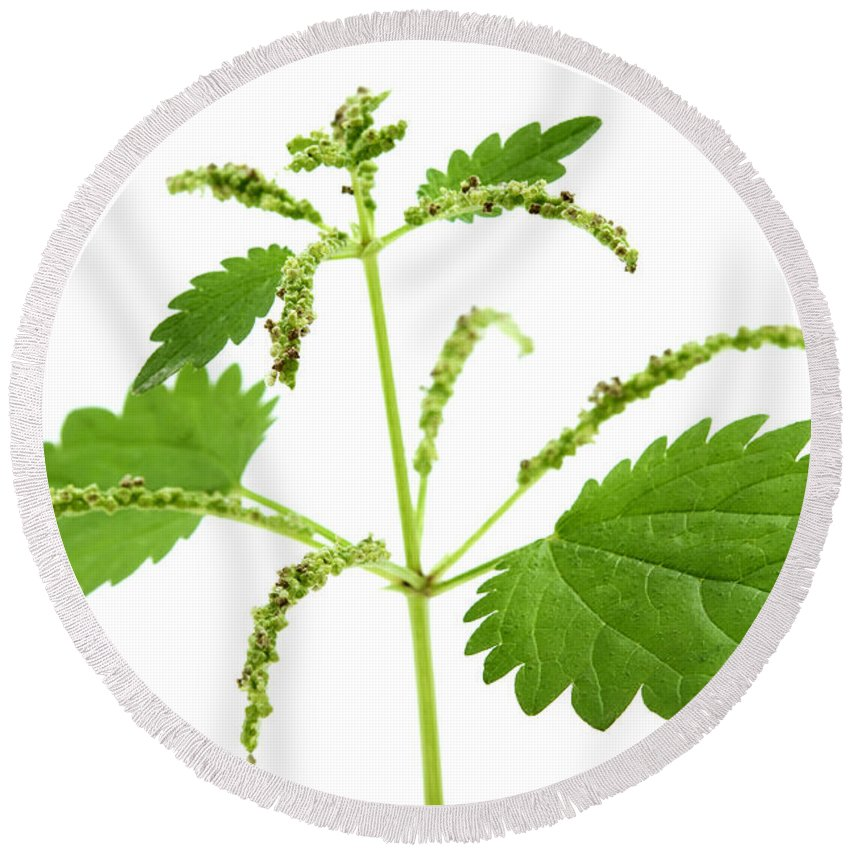 White Background Round Beach Towel featuring the photograph Stinging Nettle by Fabrizio Troiani