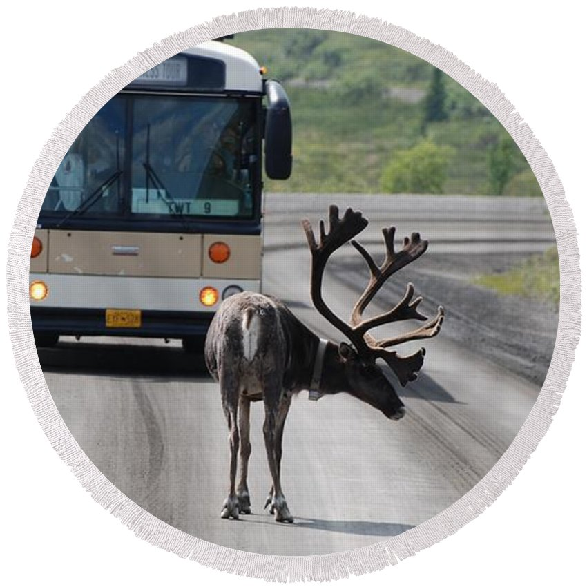Caribou Round Beach Towel featuring the photograph Stopping Traffic by Eric Tressler