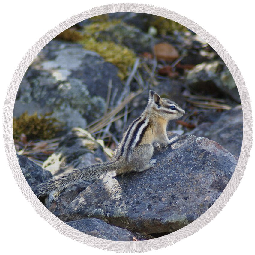 Chipmunks Round Beach Towel featuring the photograph Straight Tailed Chipmunk On A Rock by Ben Upham III