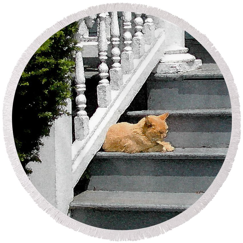 Stratford Ct Round Beach Towel featuring the photograph Stratford Cat Nap by Melissa A Benson