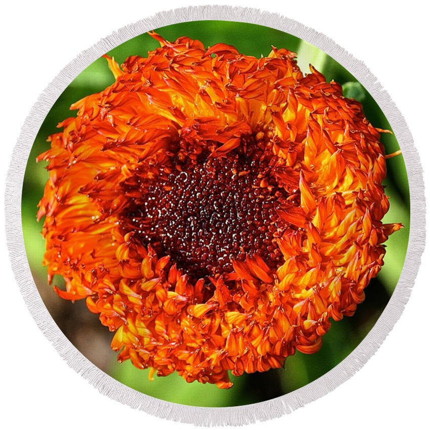 Plant Round Beach Towel featuring the photograph Strawflower Saturated by Susan Herber