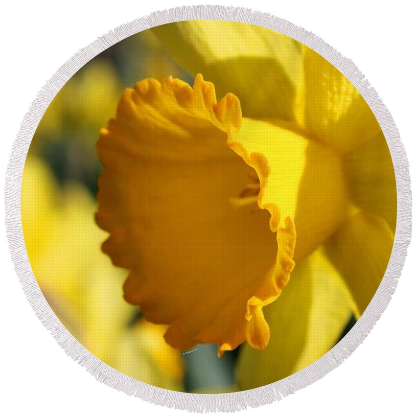 Daffodil Round Beach Towel featuring the photograph Stylin' An Profilin' by Betty Northcutt