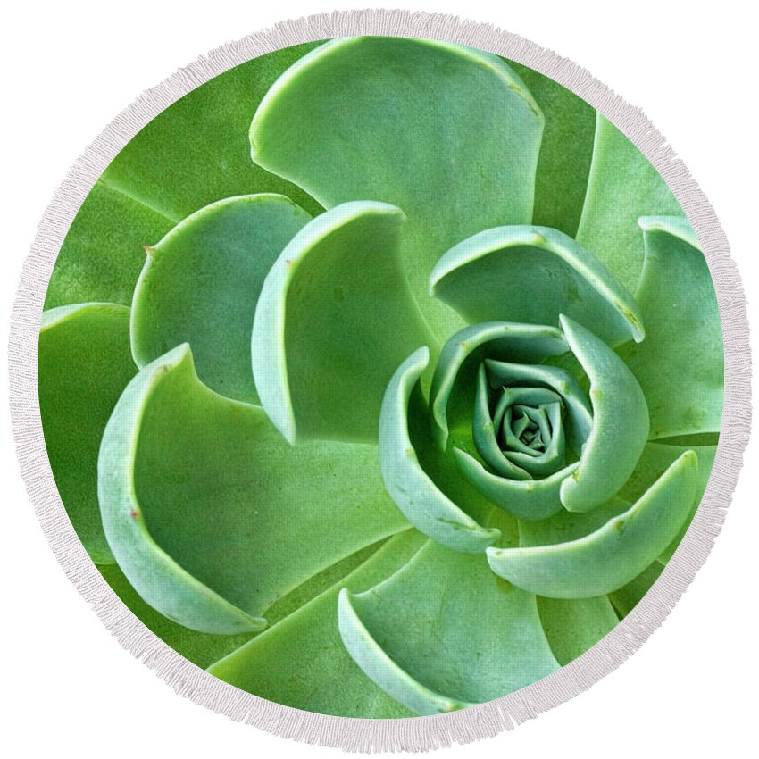 Succulent Round Beach Towel featuring the photograph Succulent by Dave Mills