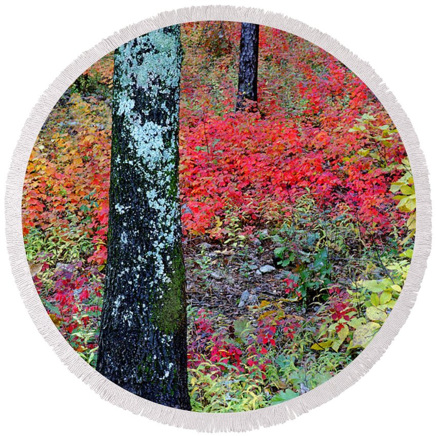 Autumn Scene Round Beach Towel featuring the photograph Sumac Slope And Lichen Covered Tree by Greg Matchick