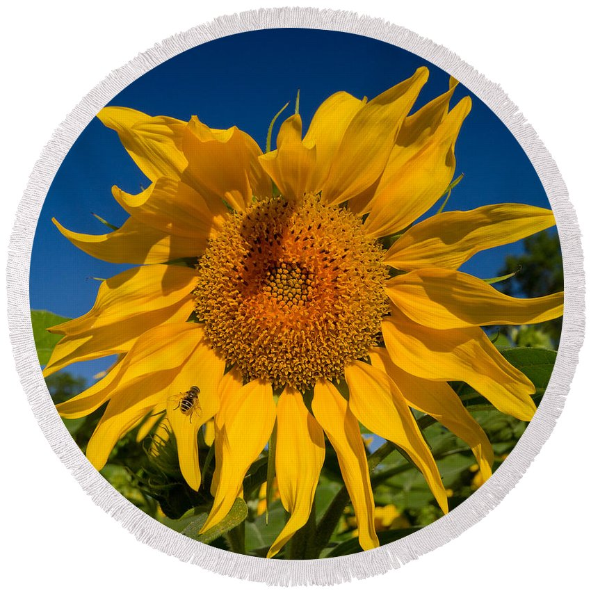 Sunflower Round Beach Towel featuring the photograph Summer by Mircea Costina Photography