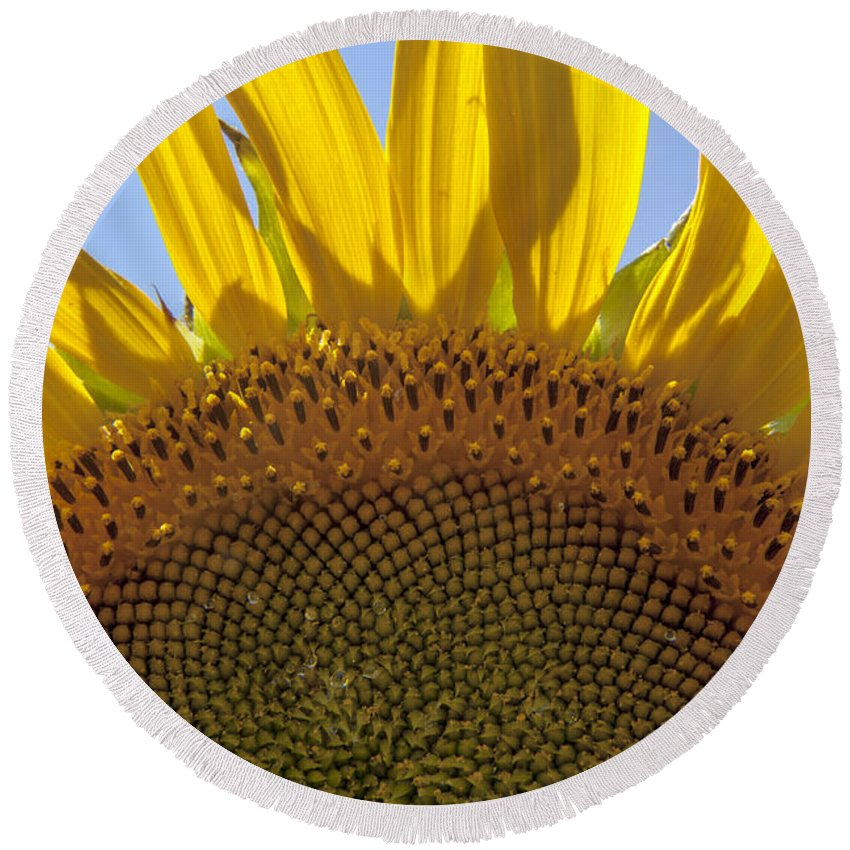 Sunflower Round Beach Towel featuring the photograph Sunflower Arch by Darleen Stry