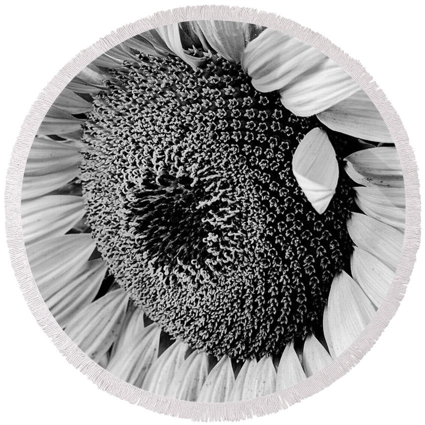 B&w Round Beach Towel featuring the photograph Sunflower by Dan Wells