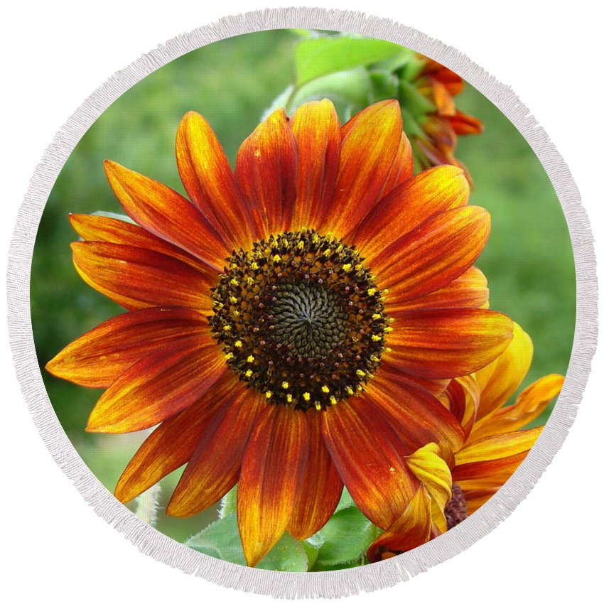 Red Sunflower Round Beach Towel featuring the photograph Sunflower by Lisa Rose Musselwhite