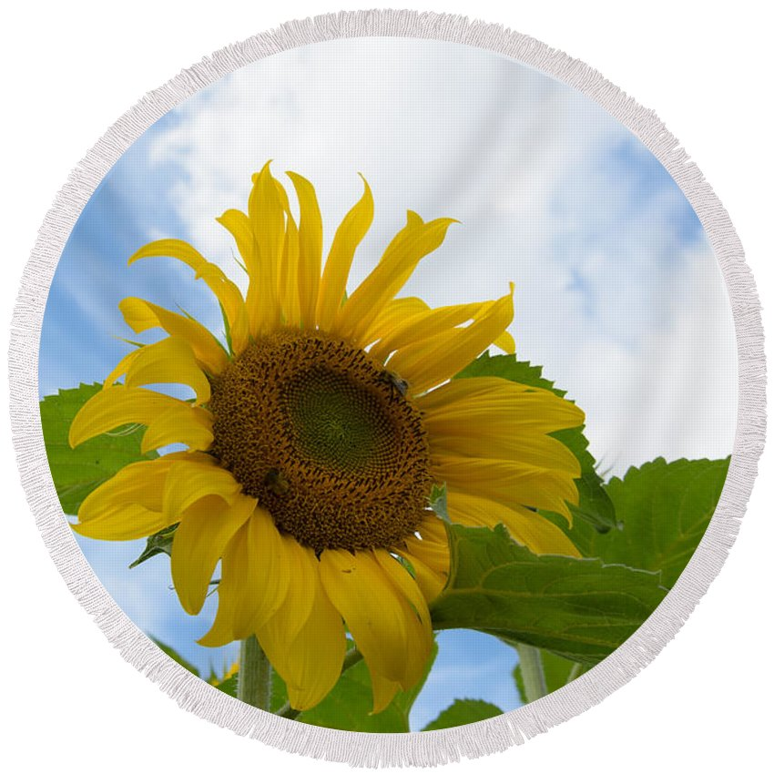 Orange Round Beach Towel featuring the photograph Sunflower by Michael Goyberg