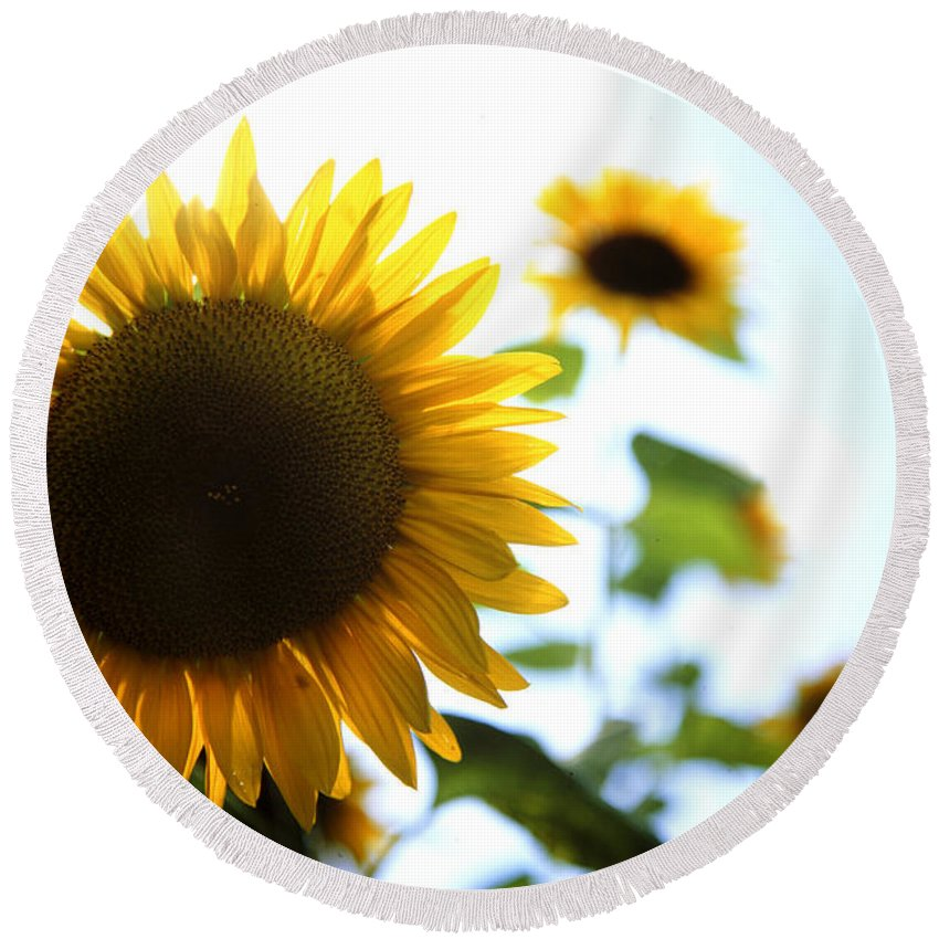 Beautiful Round Beach Towel featuring the photograph Sunflowers by Les Cunliffe
