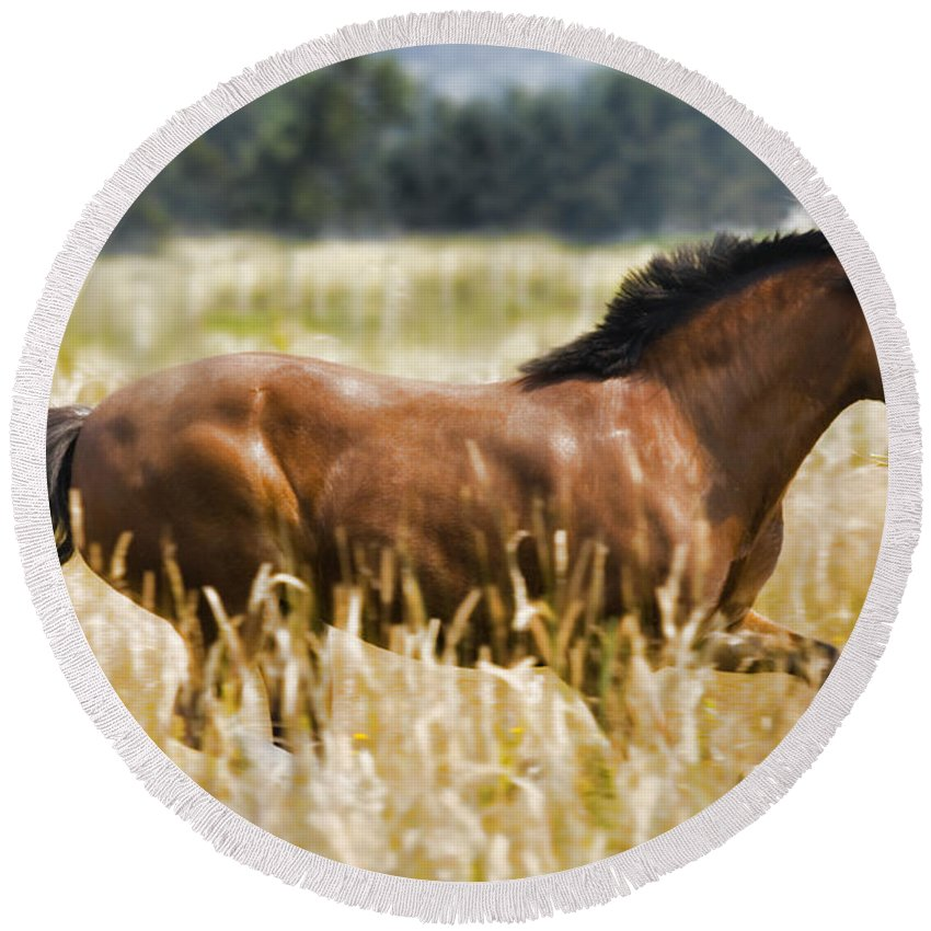 Pony Round Beach Towel featuring the photograph Sunny Day Cruzin' by Karen Ulvestad