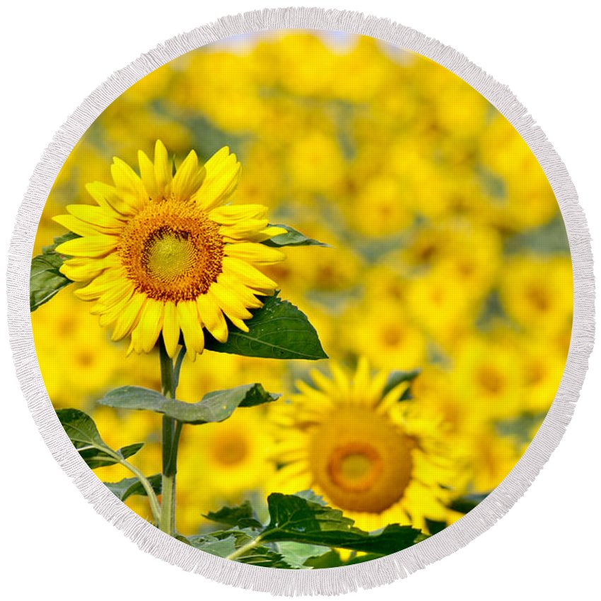 Wildflower Round Beach Towel featuring the photograph Sunny Disposition by Bill Pevlor