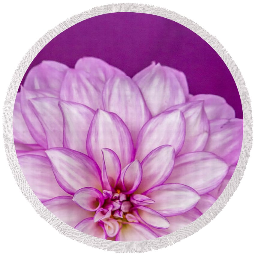 Dahlia Round Beach Towel featuring the photograph Sunset Dahlia 3 by Albert Seger