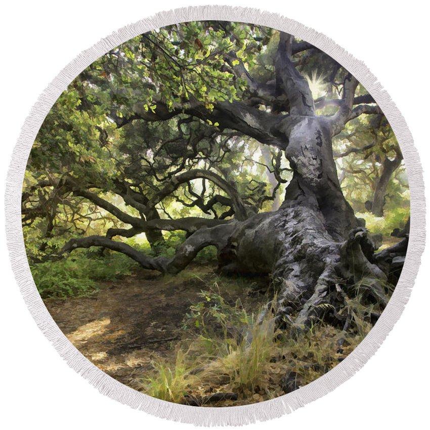 Tree Round Beach Towel featuring the digital art Sunstar Oak by Sharon Foster