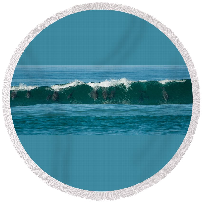 Action Round Beach Towel featuring the photograph Surfing Dolphins 2 by Alistair Lyne