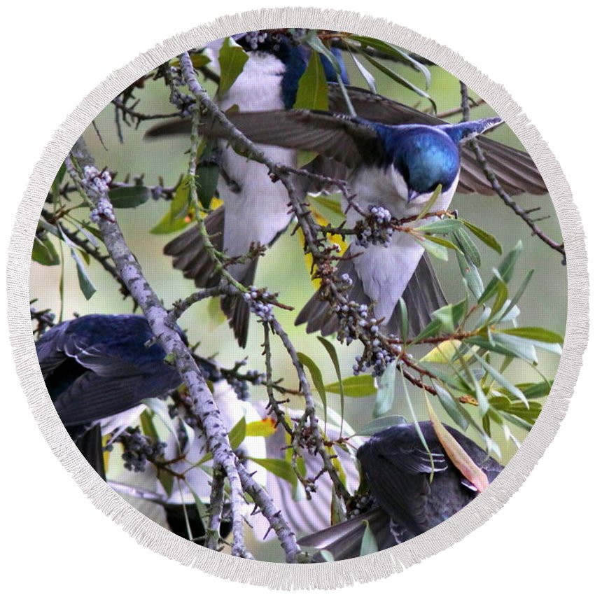 Tree Swallows Round Beach Towel featuring the photograph Swallows In Pooler by Travis Truelove