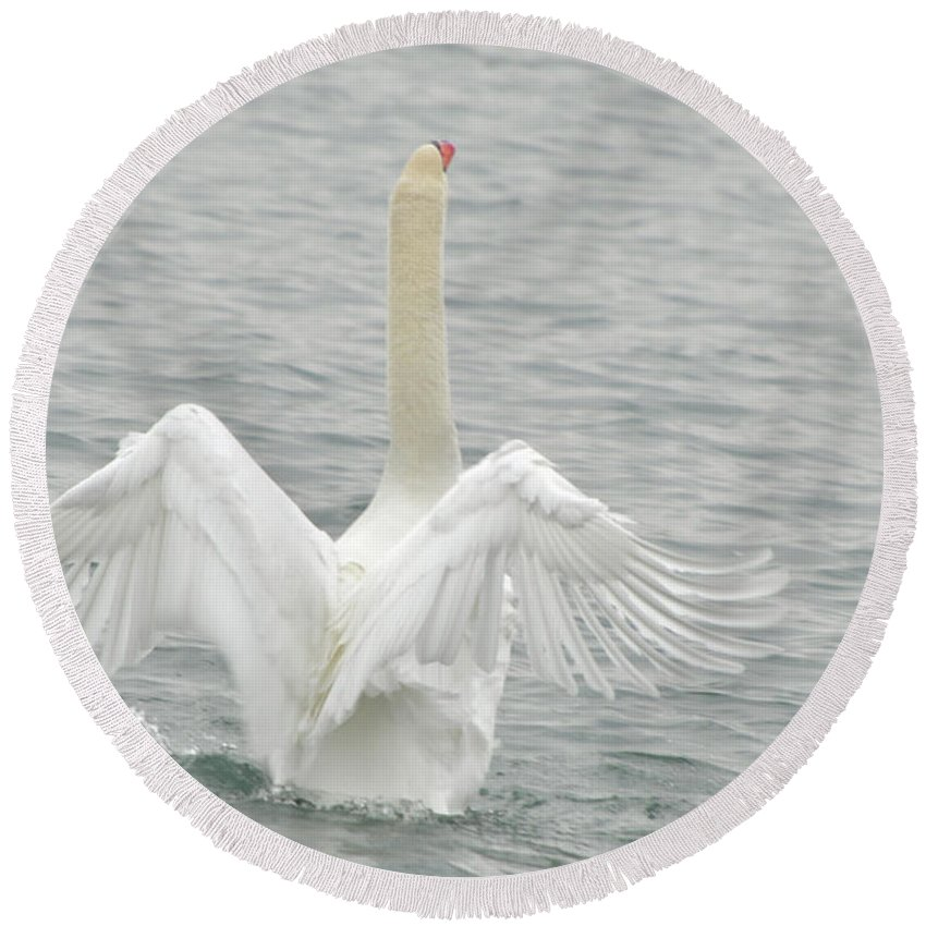 Swan Round Beach Towel featuring the photograph Swan by Ronald Grogan