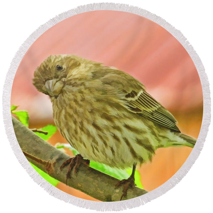 Nature Round Beach Towel featuring the photograph Sweet Finch Painted Effect by Debbie Portwood