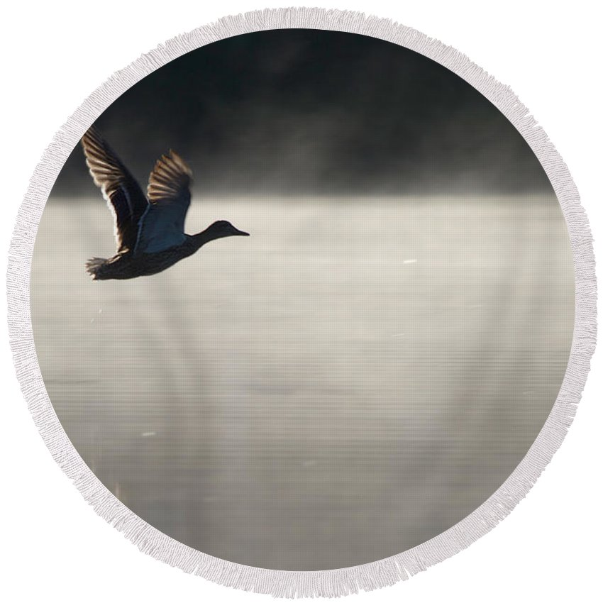 Fog Round Beach Towel featuring the photograph Taking Flight by Dan Wells