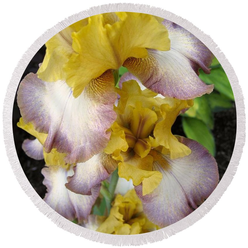 Bearded Iris Round Beach Towel featuring the photograph Tall Bearded Iris Named Butterfingers by J McCombie