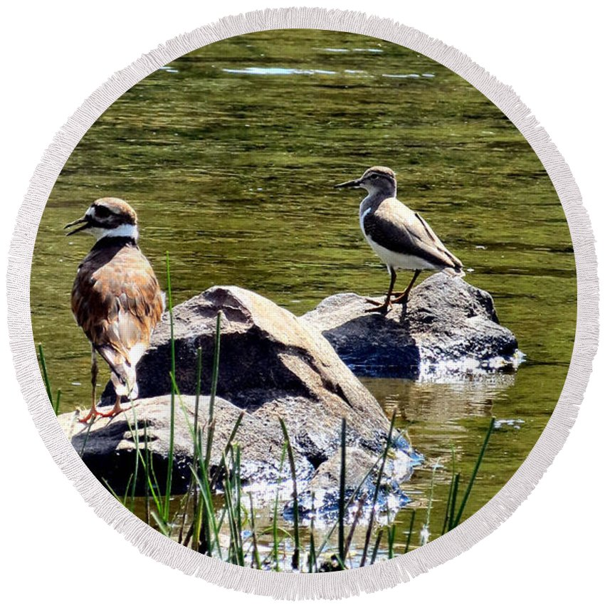 Killdeer Round Beach Towel featuring the photograph Teaching The Ropes by Art Dingo