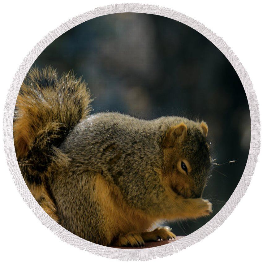 Usa Round Beach Towel featuring the photograph Thank You For The Nuts by LeeAnn McLaneGoetz McLaneGoetzStudioLLCcom