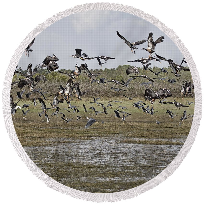 Magpie Geese Round Beach Towel featuring the photograph The Billabong V19 by Douglas Barnard
