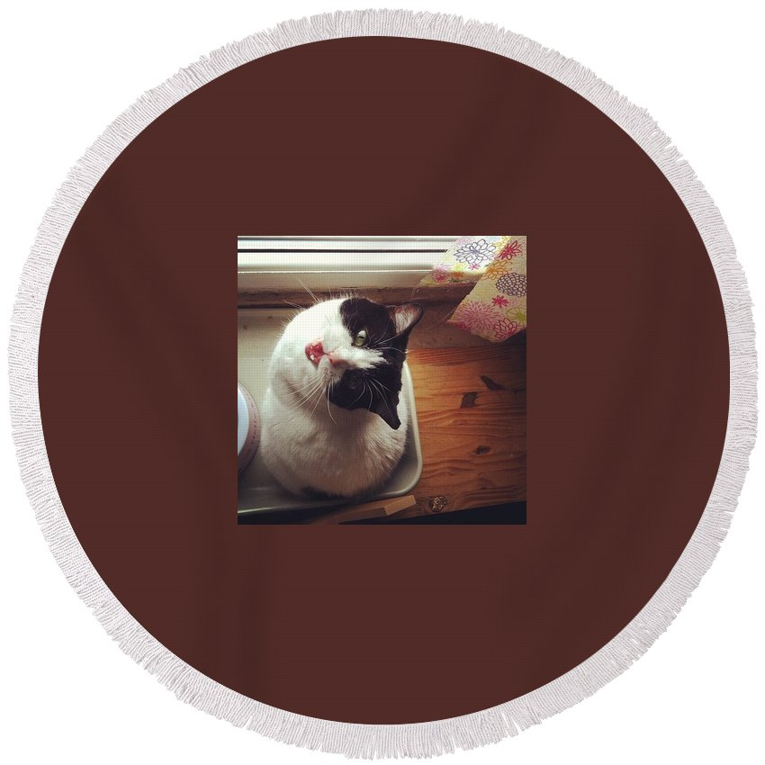 Catsofinstagram Round Beach Towel featuring the photograph the Bowl's Empty! #cat by Katie Cupcakes