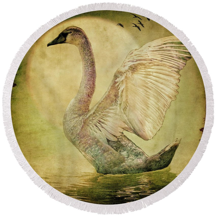 Swan Round Beach Towel featuring the photograph The Cygnet by Chris Lord