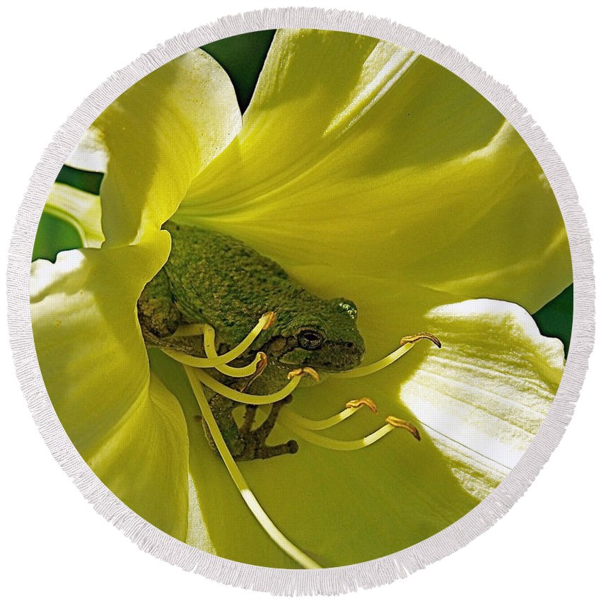 Color Photography Round Beach Towel featuring the photograph The Day Lily Met Her Prince by Sue Stefanowicz