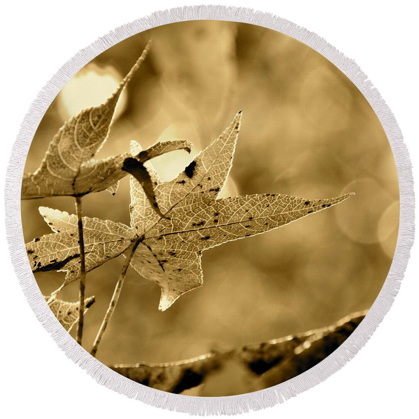 Sepia Round Beach Towel featuring the photograph The Gum Leaf by JD Grimes