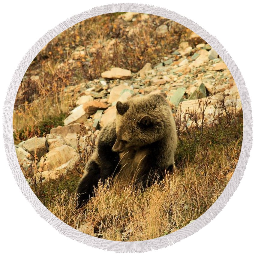 Grizzly Bear Round Beach Towel featuring the photograph The Itch by Adam Jewell