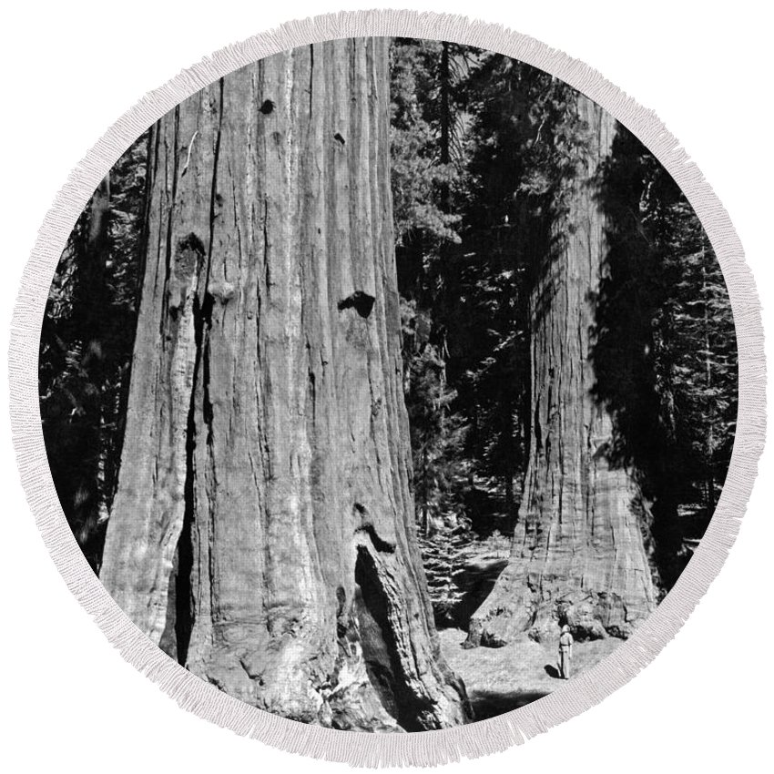 1035-737 Round Beach Towel featuring the photograph The Mariposa Grove In Yosemite by Underwood Archives