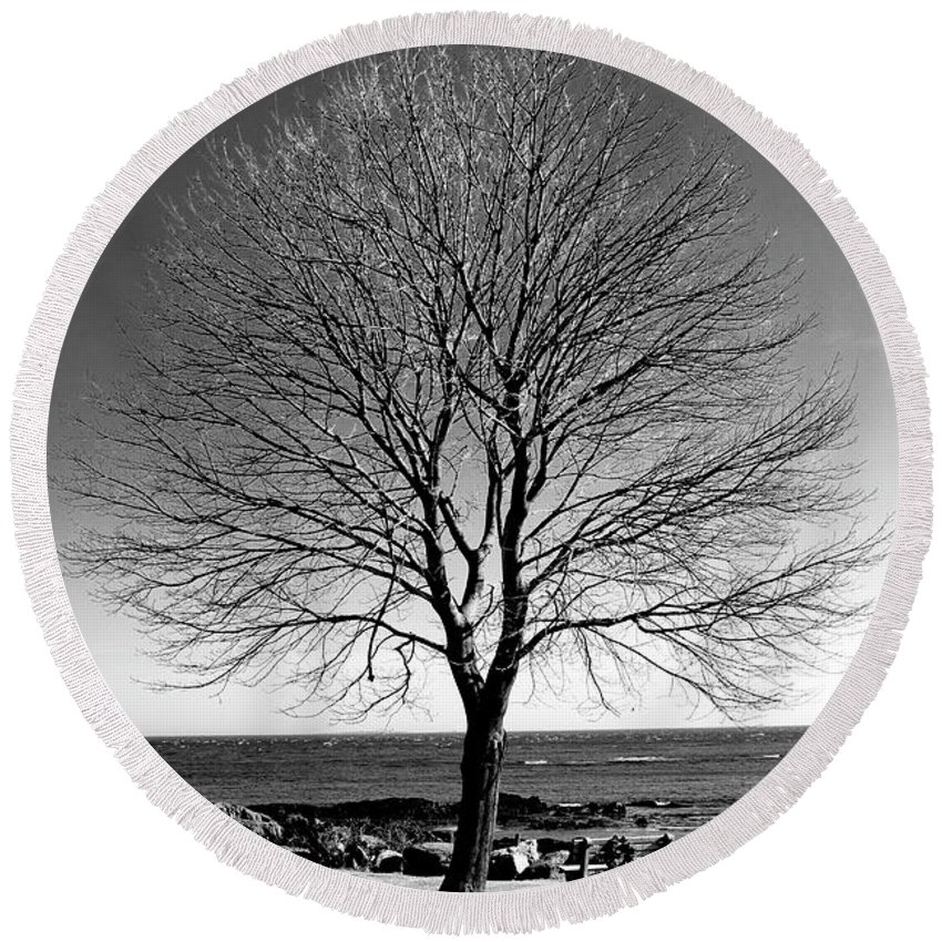 Art Round Beach Towel featuring the photograph The Perfect Tree by Greg Fortier