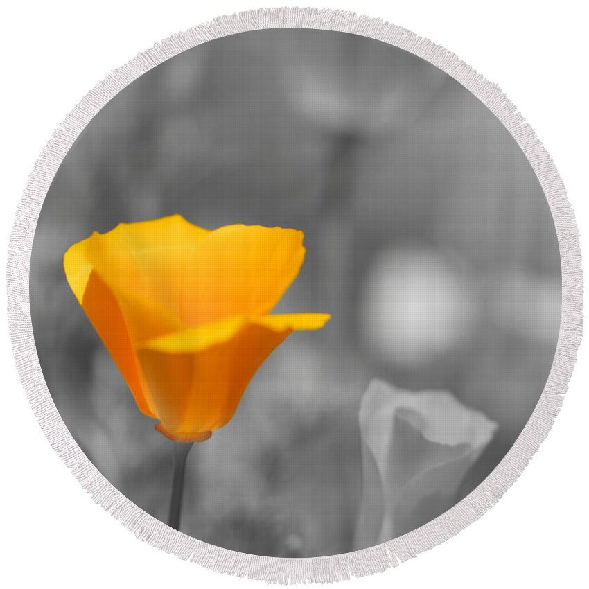 California Poppies Photographs Round Beach Towel featuring the photograph The Poppy Stands Alone by Brooke Roby