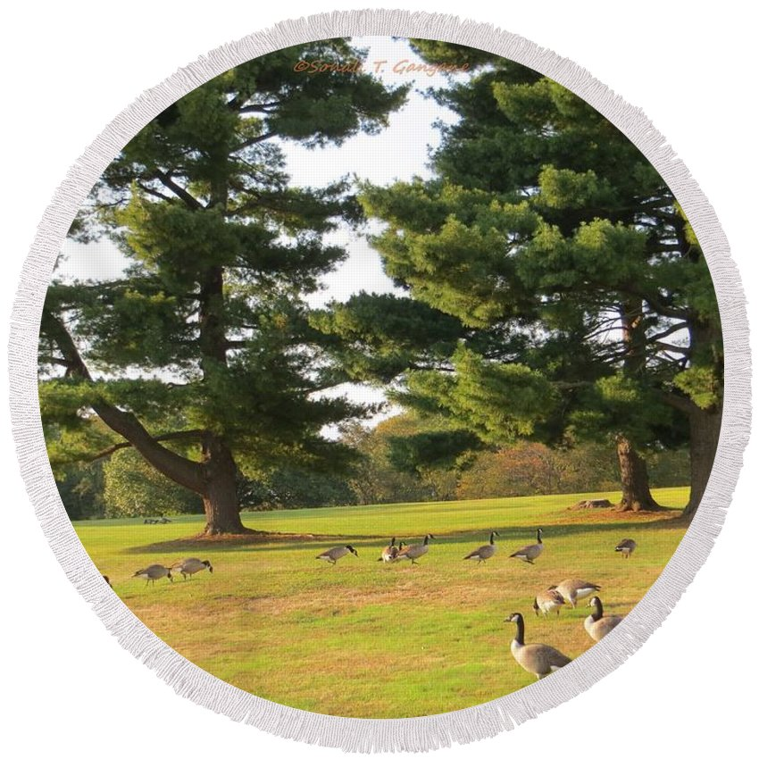 Geese Stroll Round Beach Towel featuring the photograph The Sunny Stroll by Sonali Gangane
