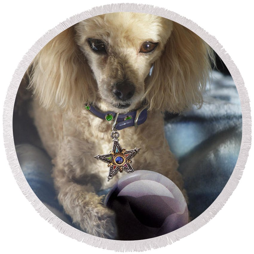 Dog Round Beach Towel featuring the photograph The Wizard Of Dogs by Diana Haronis