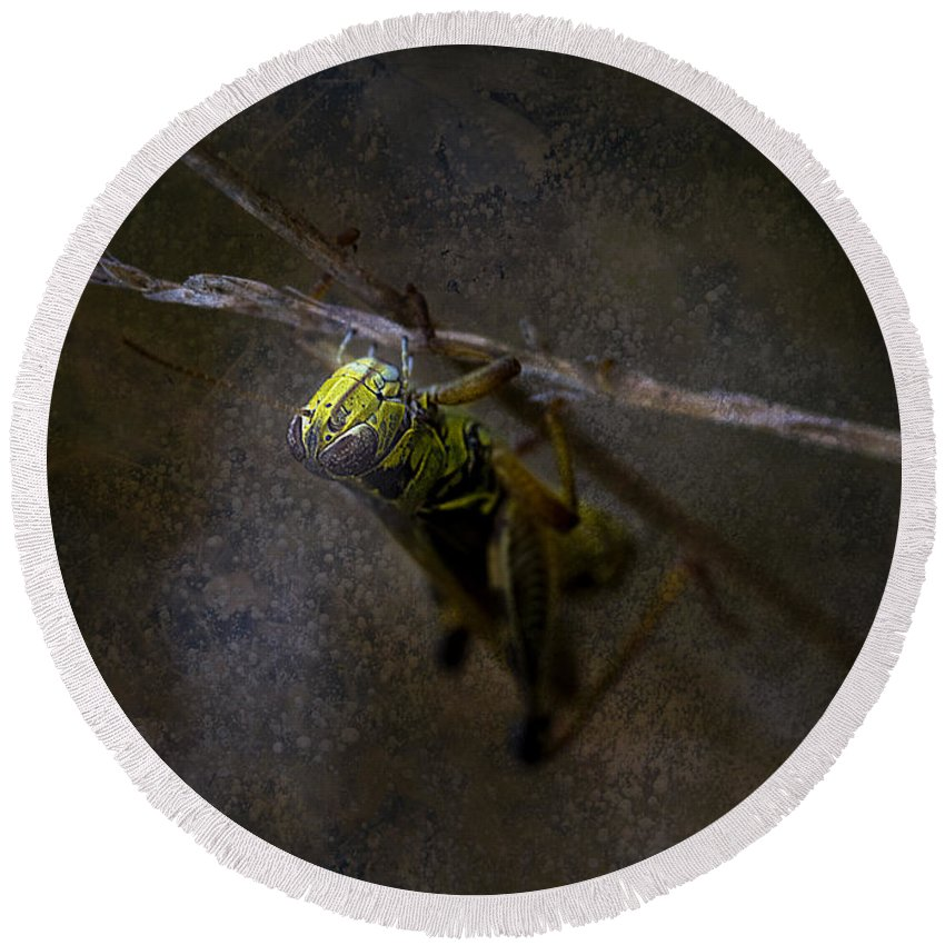 Macro.grasshopper Round Beach Towel featuring the photograph The World Below by Ron Jones