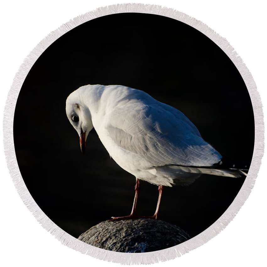 Bird Round Beach Towel featuring the photograph Thinking Seagull by Mats Silvan