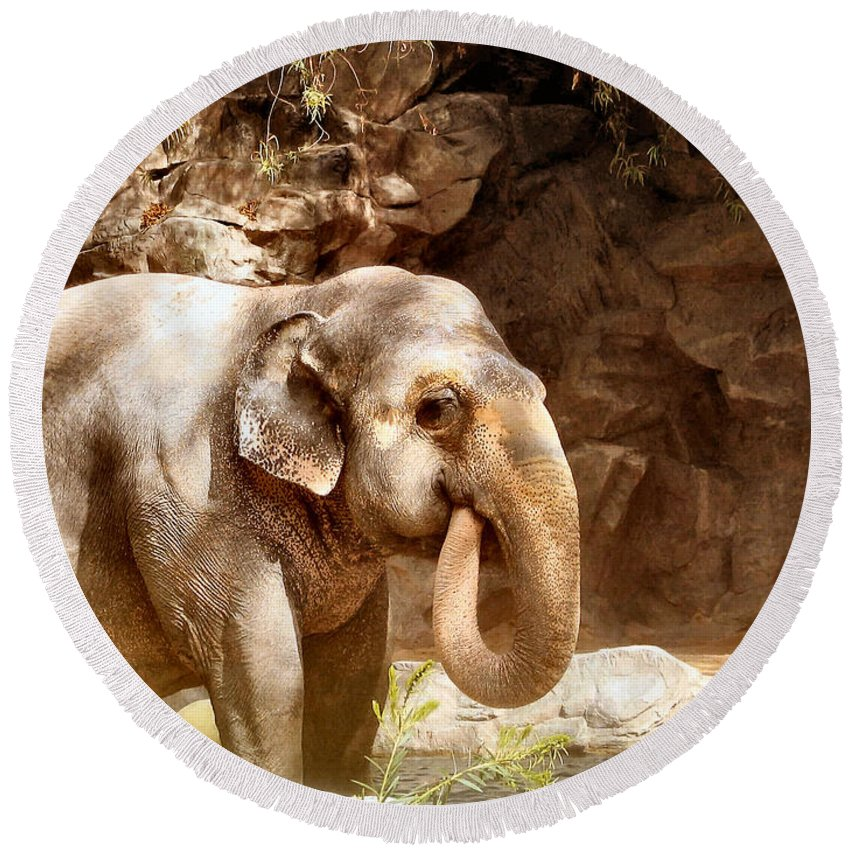 Elephant Round Beach Towel featuring the photograph Thirsty by Art Dingo