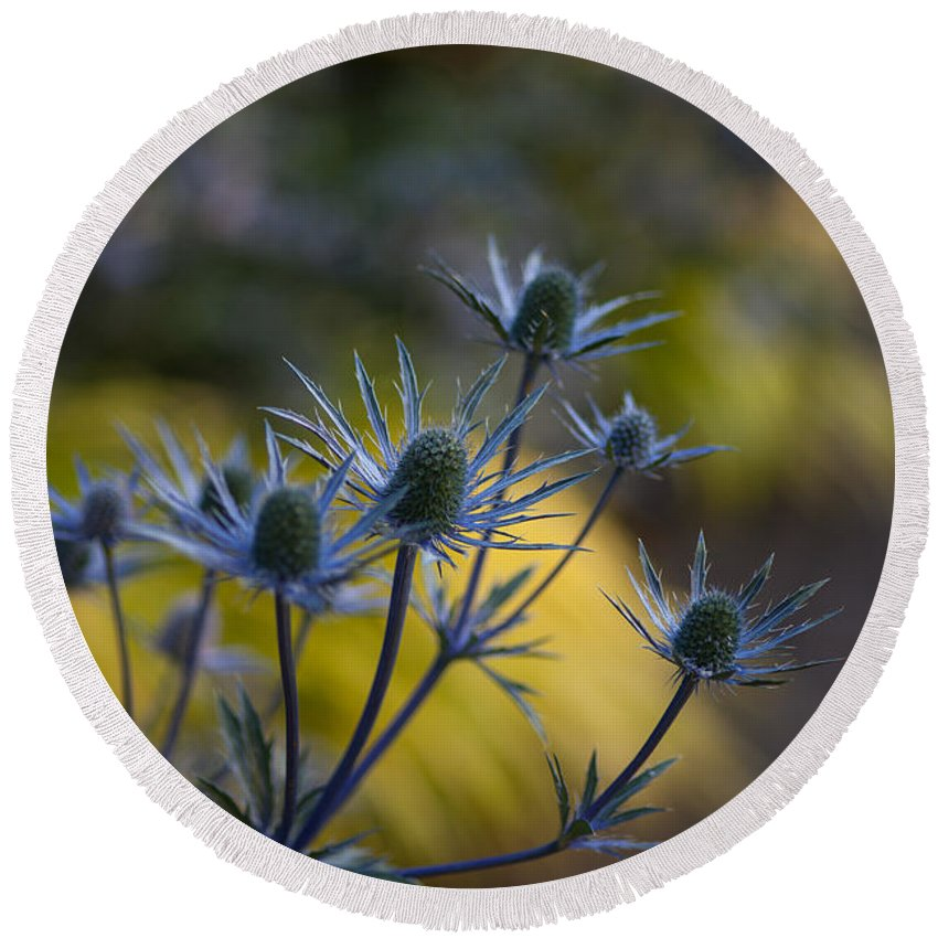 Flower Round Beach Towel featuring the photograph Thistles Abstract by Mike Reid