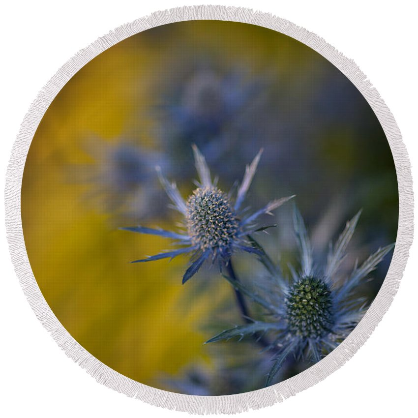 Flower Round Beach Towel featuring the photograph Thistles Motion by Mike Reid