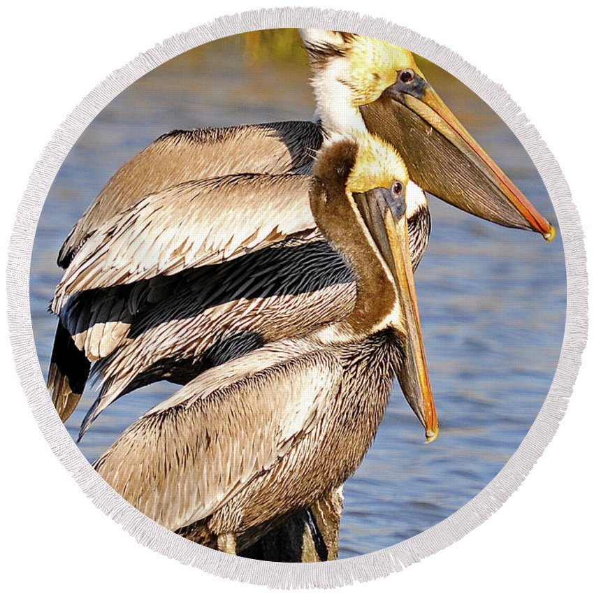 Pelican Round Beach Towel featuring the photograph Three Pelicans On A Stump by TJ Baccari