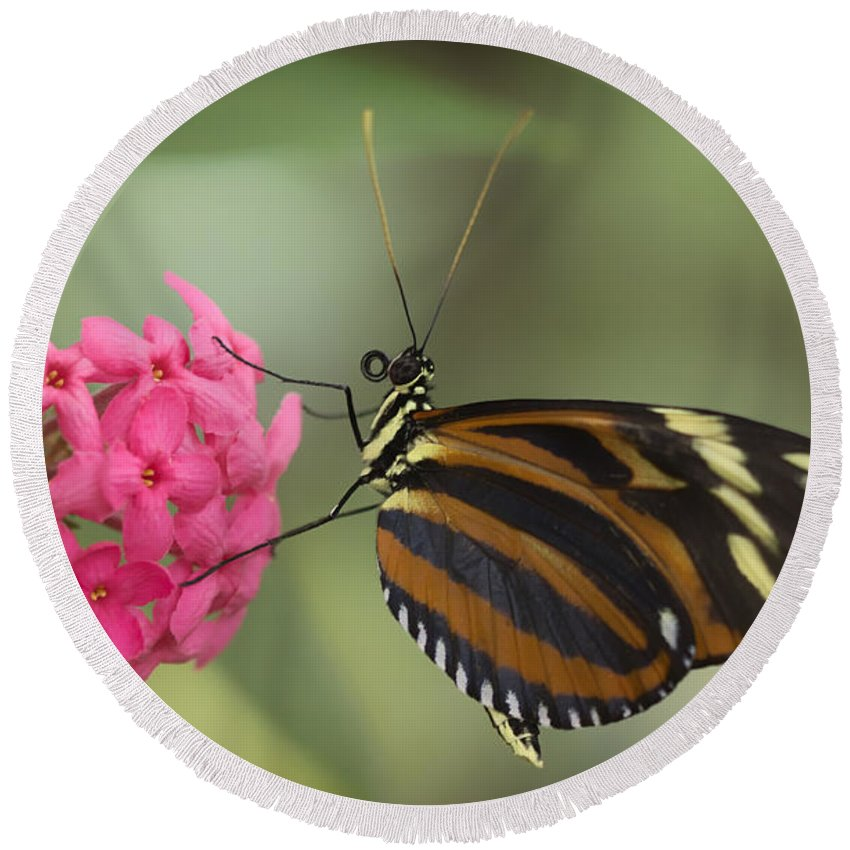 Butterfly Round Beach Towel featuring the photograph Tiger Longwing On Flower by Bill Tiepelman